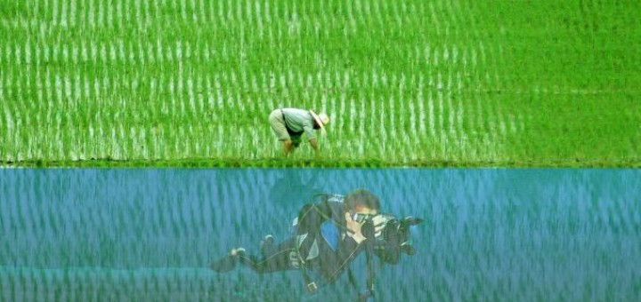 Rice farmer or Photographer