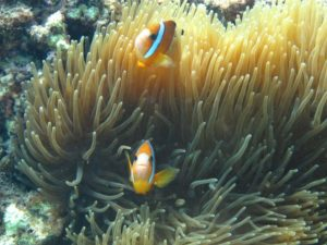 Camiguin Balbagon Corals