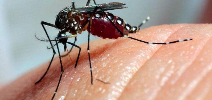 Dengue Outbreak 2019